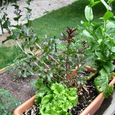 How Does My Garden Grow? 6/20