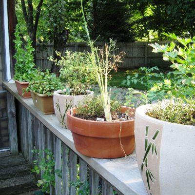CSA & Garden Update 7/10
