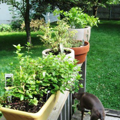 Garden & CSA Update 7/26