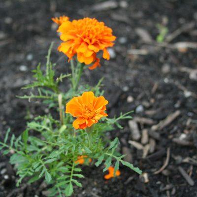 Garden Update 6/28/11