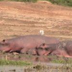 Uganda, Days 11-14: Queen Elizabeth Park & Returning Home