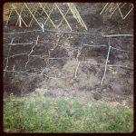 Garden Update: Late April 2012