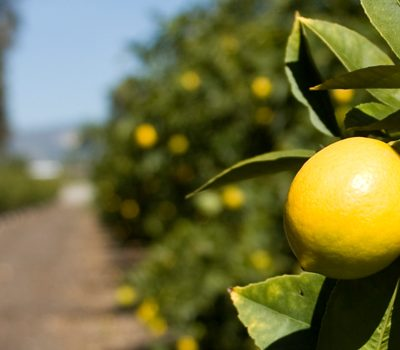 Lemons #AddJoy
