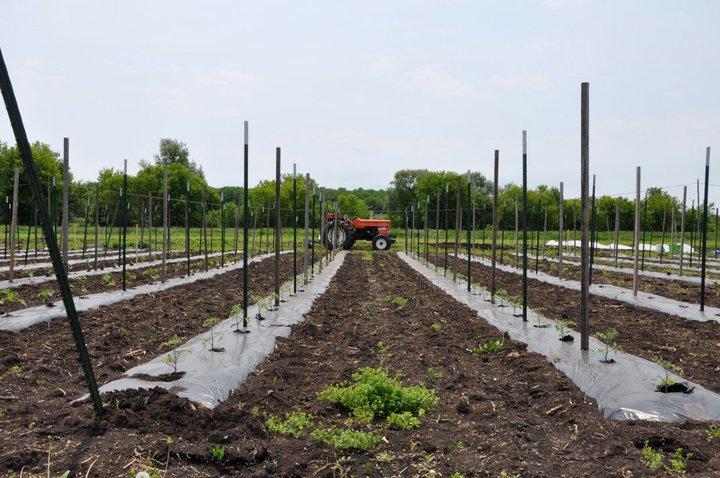 A New Season for Groundswell Community Farm CSA