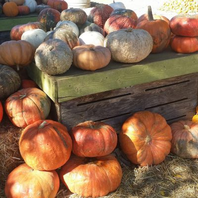 A Case for Local Winter Squash